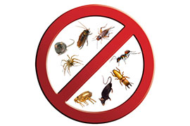 Burlington Burlington PEST CONTROL